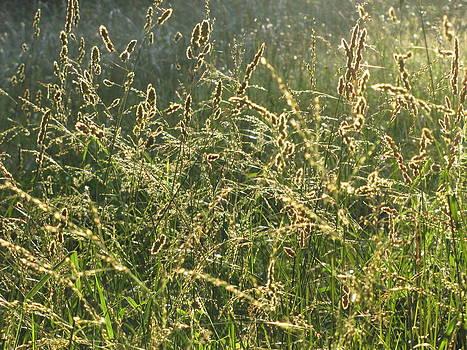 Glistening Grasses by Jennifer Weaver