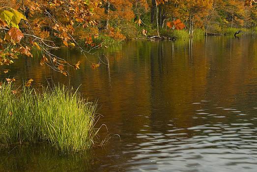Glorious Fall by Cindy Rubin