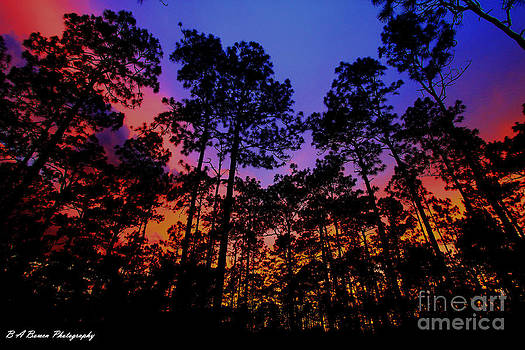 Barbara Bowen - Glowing Forest