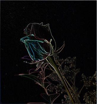 Glowing  Rose by Ginger Egerton