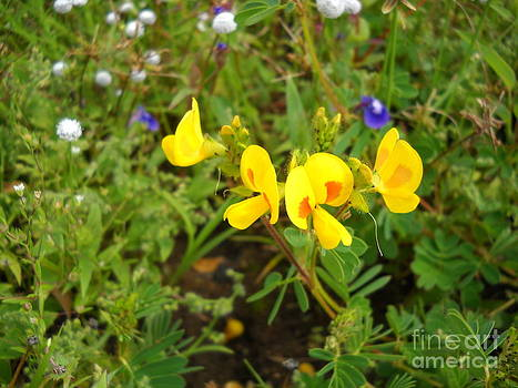 glowry of Yellow by Bgi Gadgil