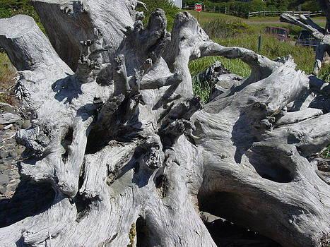 Katherine Huck Fernie Howard - Gnarled Tree