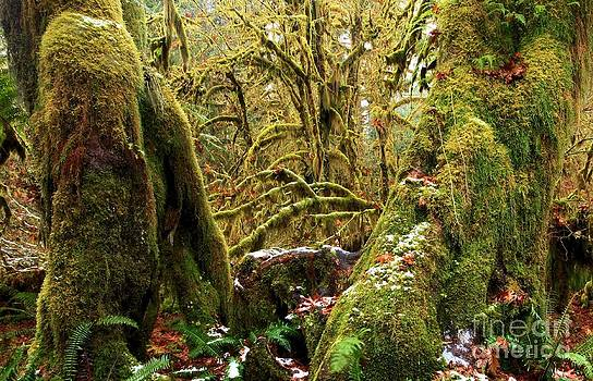 Adam Jewell - Gnomes In The Rainforest