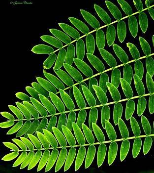 Go green by Jyotsna Chandra
