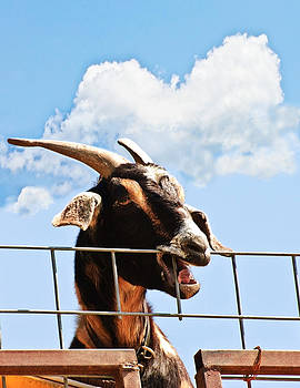 Goat at a Fence by Susan Leggett