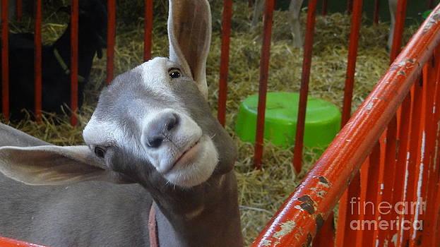 Goat One by Joyce Goldin