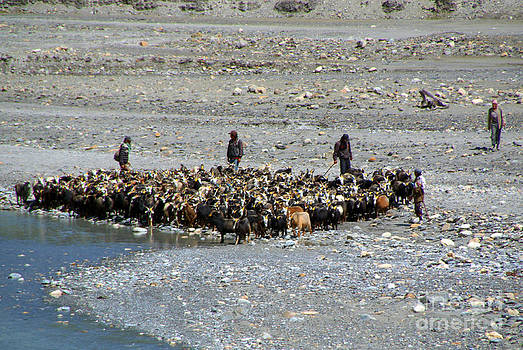 Goats at River en route to Ghasa by Serena Bowles