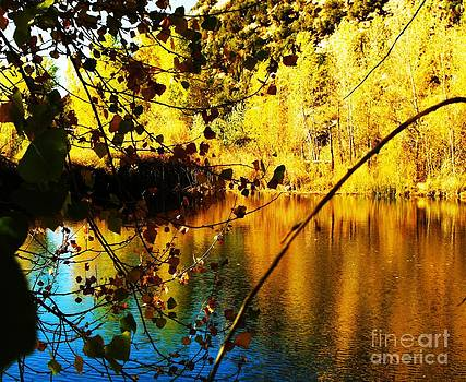 Gold and Blue Pond by Annie Gibbons