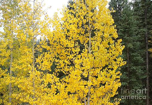 Gold and Green by Donna Parlow