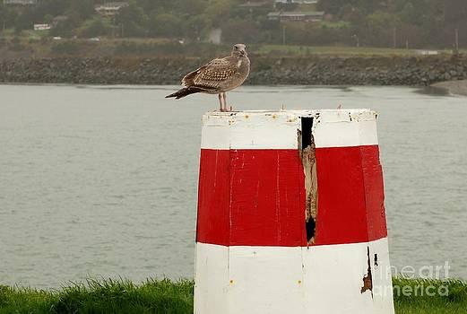 Gold Beach Gull by Rose Jones