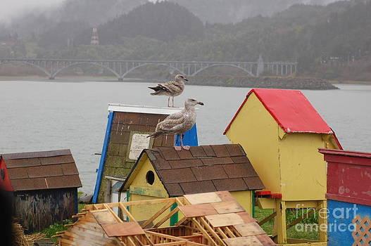 Gold Beach Gulls by Rose Jones