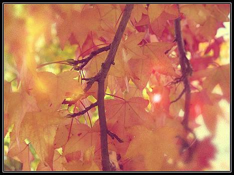 Gold Leaves by Lee Yang