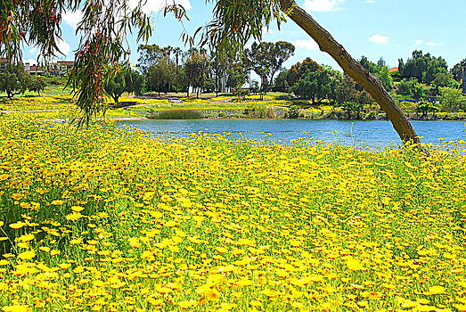 Golden Blooms - Lake Murray by Vicki Coover