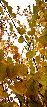 Golden Colors of Fall by Torrey E Smith