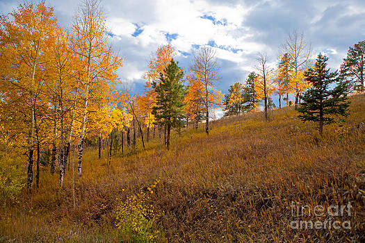 Golden Day by Barbara Schultheis