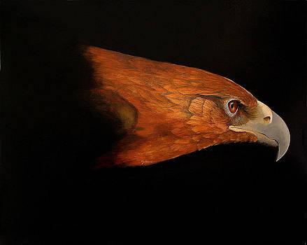 Golden Eagle by John Neal Mullican
