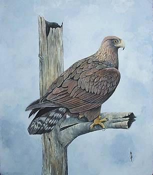 Golden Eagle by Marsha Friedman