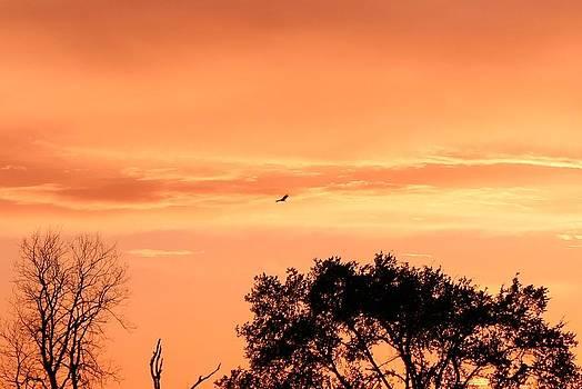Golden Evening by Lorri Crossno