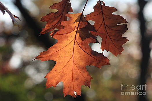 Golden Fall leave's close up by Robert D  Brozek