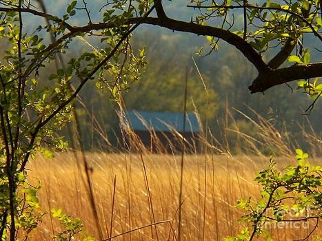 Golden Field by Joyce Kimble Smith