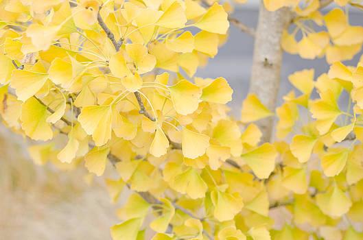 Margaret Pitcher - Golden Ginko Tree
