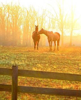 Golden Hour Horse by Esther Luna