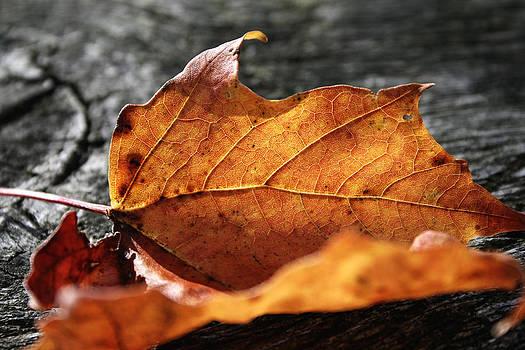 Golden Leaf by Frank Morales Jr