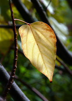Golden Leaf by Glennis Siverson