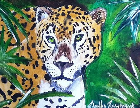 Golden Leopard by Shelby Rawlusyk