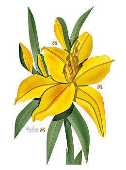 Golden Lily on White by Anne Norskog