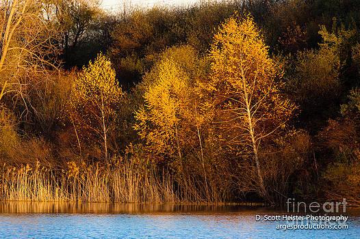 Golden Moment by Scott Heister