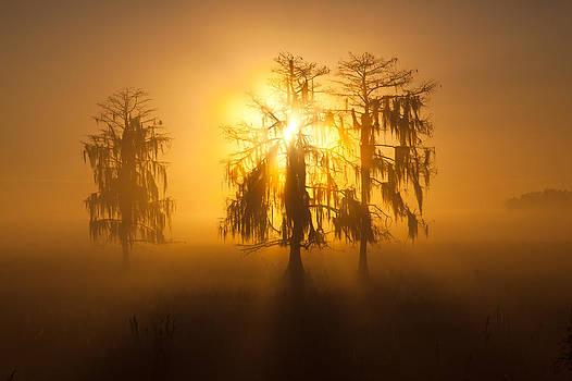 Golden Morning by Claudia Domenig