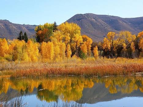Golden Pond by FeVa  Fotos