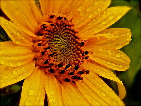 Golden Ray by Gloria Warren