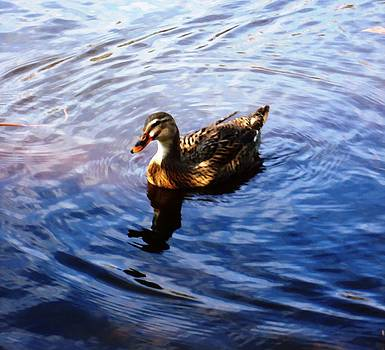 Golden Star Duck by Joan Meyland