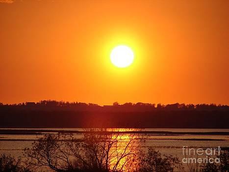 Golden Sunset by Ronald Tseng