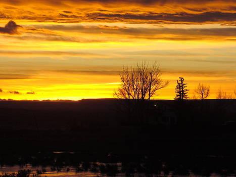 Golden Sunset by Sandi Owens