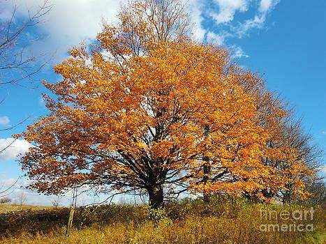 Golden Tree by Nina Nabokova