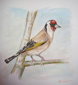 Goldfinch  by Abbas Djamat