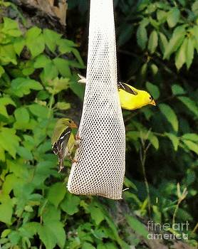 Goldfinch Couple by Elizabeth Hernandez