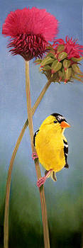 Goldfinch by Donna Francis
