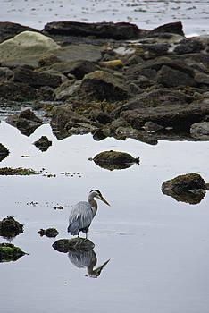 Marilyn Wilson - Heron at Botanical Beach