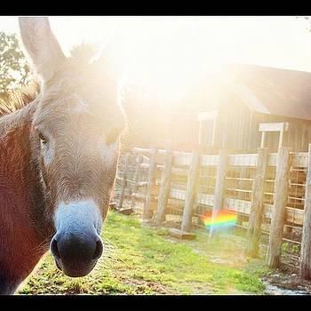 Good Morning Bella! #texas #ranch by Victoria Haas