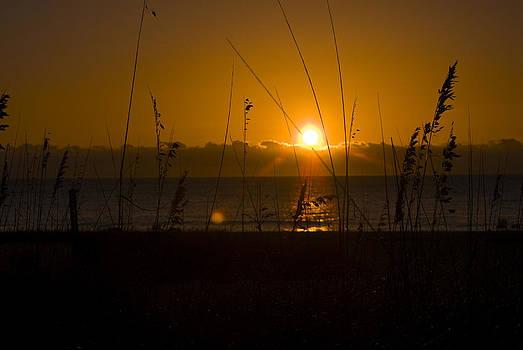Good Morning by Cindy Rubin