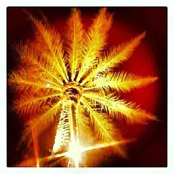 Goodbye Phoenix by Christy Borgman
