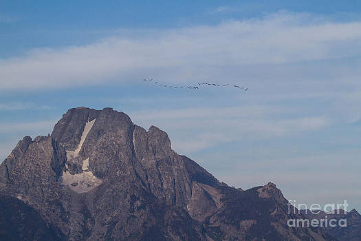 Goose Flight Over Mount Moran 2 by Katie LaSalle-Lowery