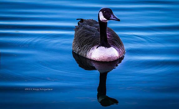 Goose by Virag Yelegaonkar