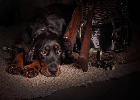 Gordon setter with two guns... by Tanya Kozlovsky