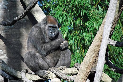 Michelle Cruz - Gorilla on a Tree