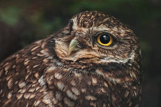 Got My Eye On You by Amber Schenk